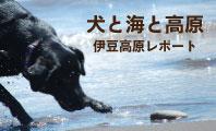 犬連れ 伊豆高原