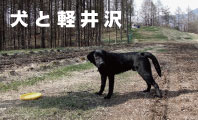 犬連れ 軽井沢