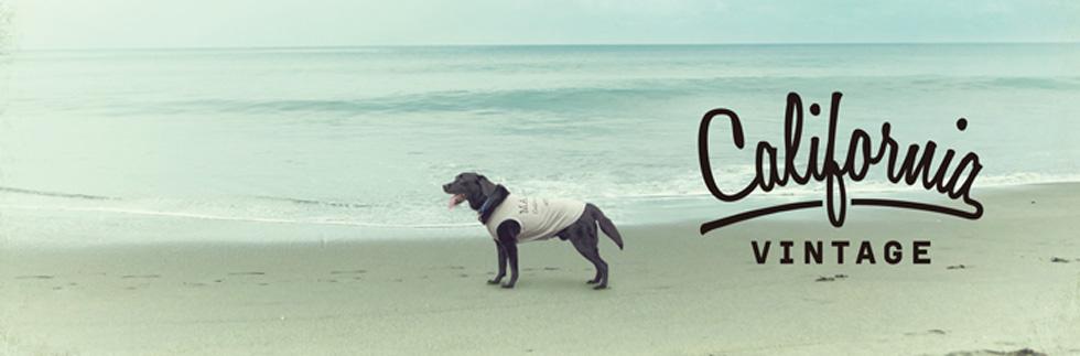 犬服 大型犬