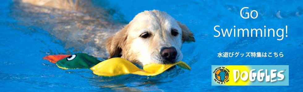 水遊び 夏 犬