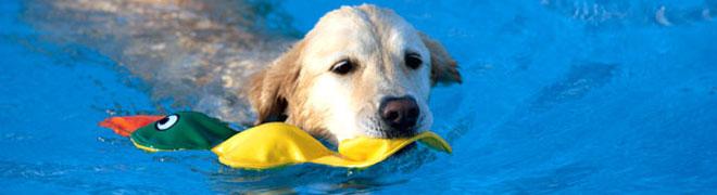 プール 犬 水遊び