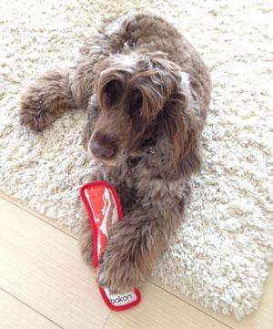 ベーコン 犬用おもちゃ