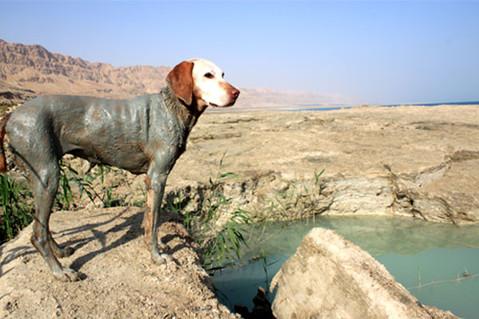 犬 シャンプー 死海