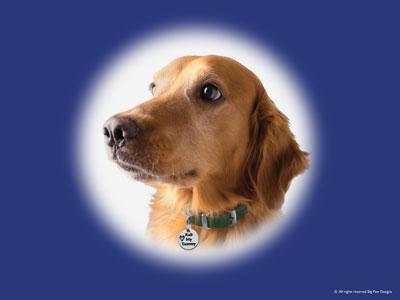 ドッグチャーム 犬のアクセサリー