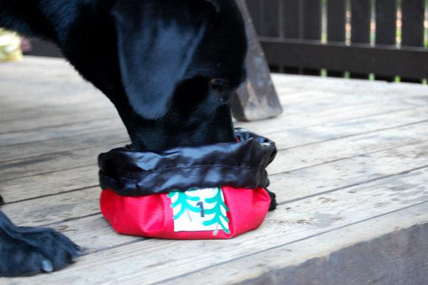 大型犬 水飲み 餌