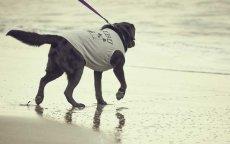 画像6: 【 California Vintage 】犬服 タンクトップ Malibu (6)