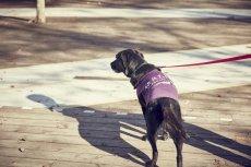 画像3: 【 大型犬専用 大型犬サイズの犬服 】犬服 タンクトップ Malibu 大型犬用 (3)