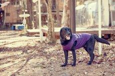 画像7: 【 大型犬専用 大型犬サイズの犬服 】犬服 タンクトップ Malibu 大型犬用 (7)