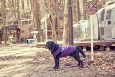 画像1: 【 大型犬専用 大型犬サイズの犬服 】犬服 タンクトップ Malibu 大型犬用 (1)
