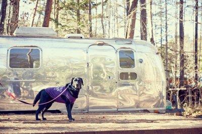 画像2: 【 大型犬専用 大型犬サイズの犬服 】犬服 タンクトップ Malibu 大型犬用