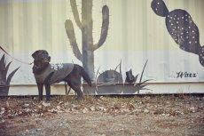 画像4: 【 大型犬専用 大型犬サイズの犬服 】犬服 タンクトップ San Francisco 大型犬用 (4)
