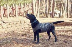 画像2: 【 大型犬専用 大型犬サイズの犬服 】犬服 タンクトップ San Francisco 大型犬用 (2)