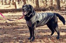 画像1: 【 大型犬専用 大型犬サイズの犬服 】犬服 タンクトップ San Francisco 大型犬用 (1)