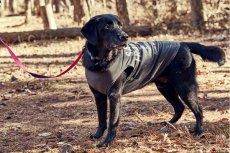 画像6: 【 大型犬専用 大型犬サイズの犬服 】犬服 タンクトップ San Francisco 大型犬用 (6)