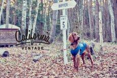 画像8: 【 California Vintage 】犬服 タンクトップ Yosemite (8)