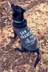 画像6: 【 California Vintage 】犬服 タンクトップ San Francisco (6)
