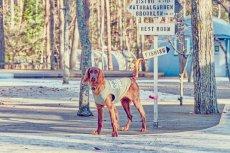 画像9: 【 California Vintage 】犬服 タンクトップ Yosemite (9)