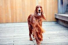 画像3: 【SALON FOR DOGS】トライアルセット 30ml  (3)