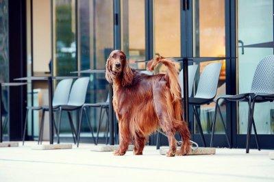 画像1: 【SALON FOR DOGS】トライアルセット 30ml