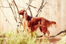 画像5: 【SALON FOR DOGS】トライアルセット 30ml  (5)