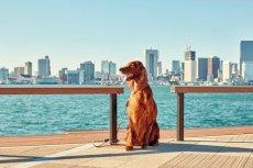 画像10: 【SALON FOR DOGS】 ミネラルセット 300ml  (10)