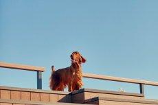 画像8: 【SALON FOR DOGS】トライアルセット 30ml  (8)