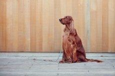 画像6: 【SALON FOR DOGS】トライアルセット 30ml  (6)