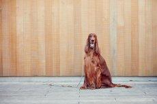 画像12: 【SALON FOR DOGS】 ミネラルコンディショナー 300ml (12)