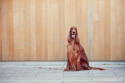 画像1: 【SALON FOR DOGS】 ミネラルコンディショナー Pro  業務用 犬用コンディショナー
