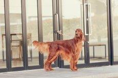 画像12: 【SALON FOR DOGS】トライアルセット 30ml  (12)