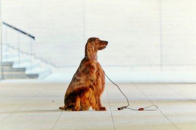 画像1: 【SALON FOR DOGS】 ミネラルPro 業務用 セット  3.8 L