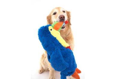 画像1: 【DOGGLES】Blue Toucan