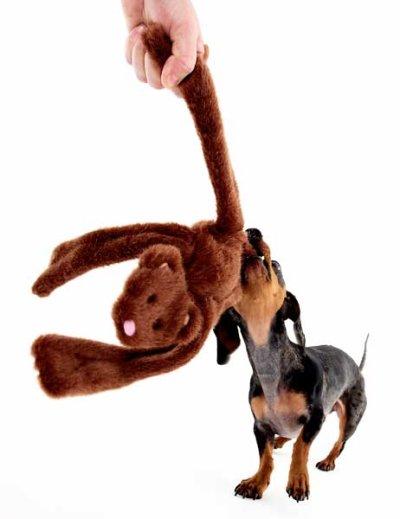 画像2: 【DOGGLES】Bear Brown Penta Pull