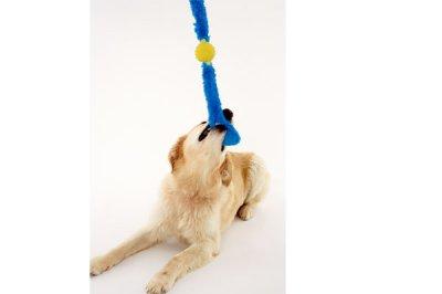 画像3: 【DOGGLES】Blue Tails
