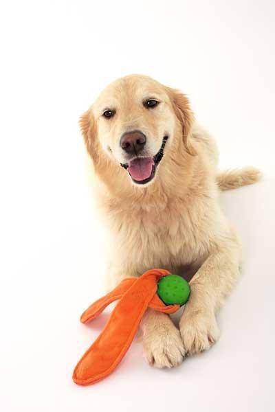 画像2: 【DOGGLES】耳付きボール - オレンジ