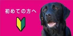 犬用品 マリブドッグ