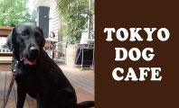 犬 ドッグカフェ 犬カフェ
