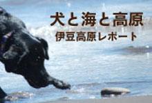犬のリード マリブドッグ
