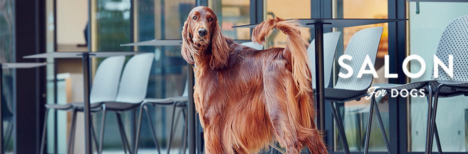 犬用 シャンプー サロン