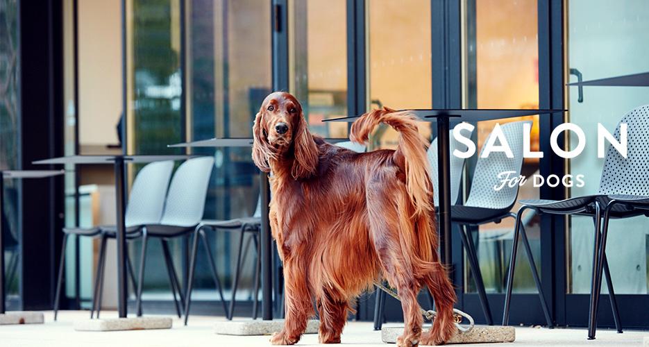 犬 シャンプー サロン