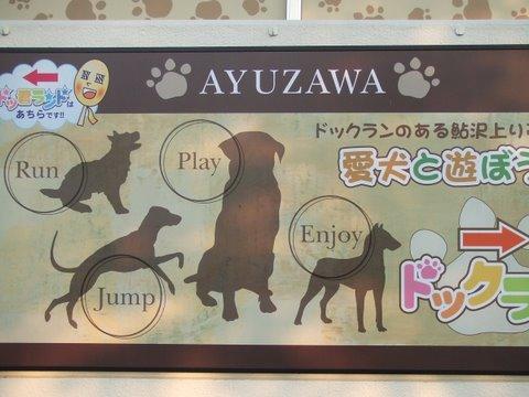 鮎沢 ドッグラン 愛犬