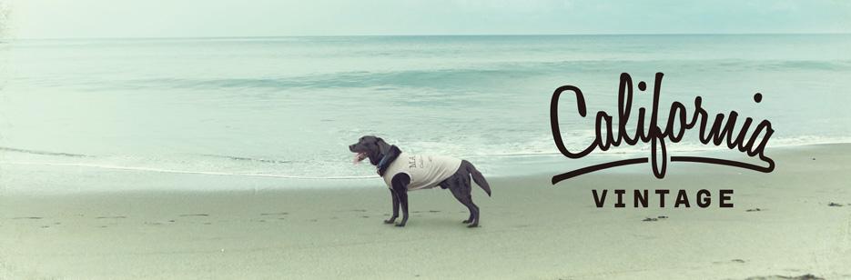 犬服 おしゃれ