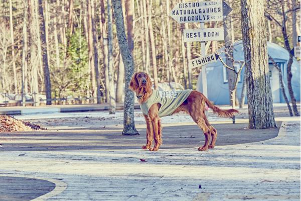 画像1: 【 California Vintage 】犬服 タンクトップ Yosemite (1)