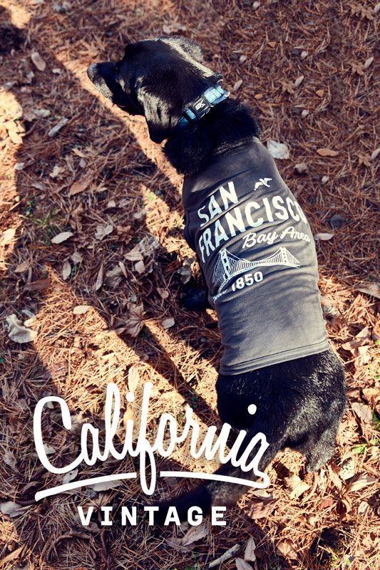 犬服 カリフォルニアビンテージ