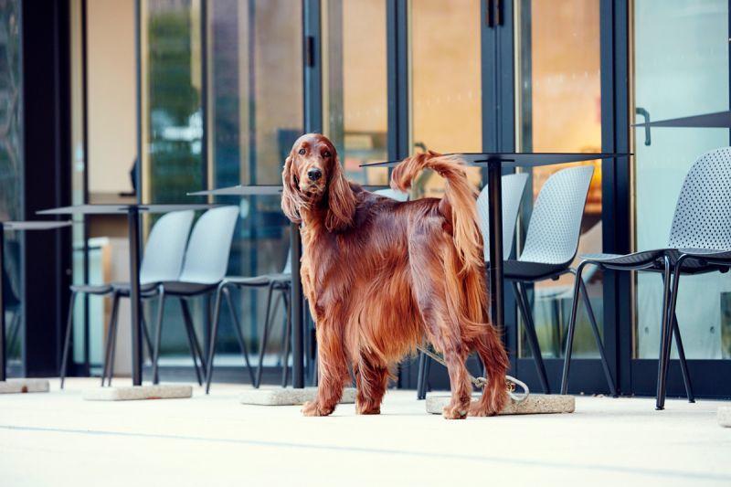 犬用 シャンプー サロンフォードッグス