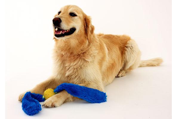 画像1: 【DOGGLES】Blue Tails (1)